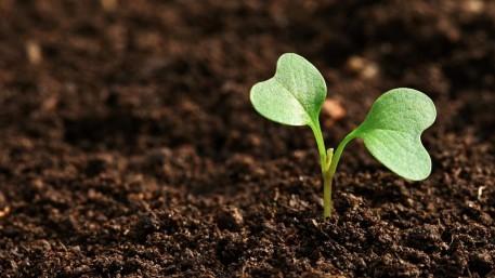 Grünes Licht für die Entwicklungsstrategie für den Lebensmittelbereich des Kantons Fribourg