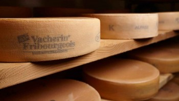 Branchenorganisation des Vacherin Fribourgeois (BOVF)