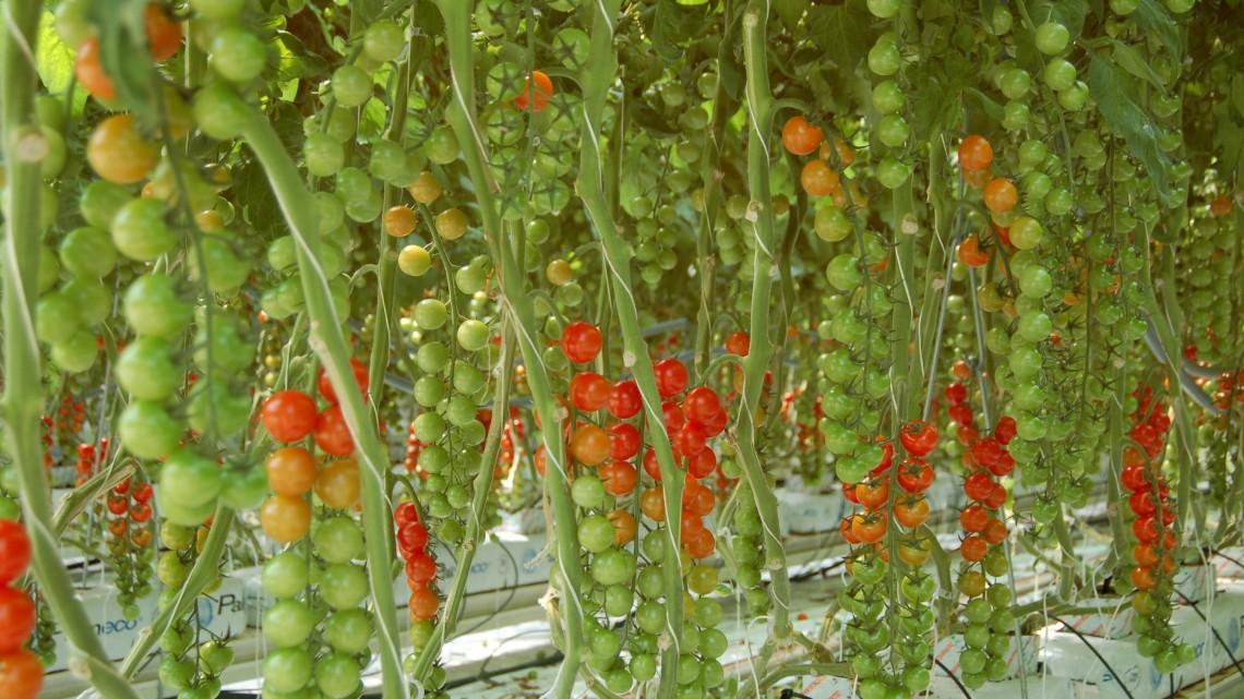 Les agritech en Suisse