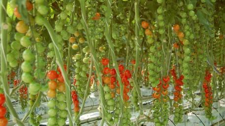 Agritech in der Schweiz