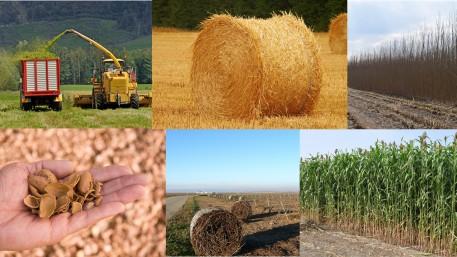 Wertschöpfung aus agrobiomasse